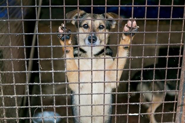 adopt rescued animals in Tucson